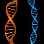 genetics adhd ritalin concerta aderal