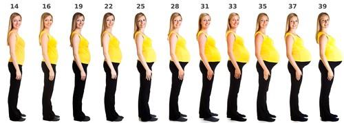 Approximate Timetable of Prenatal Development
