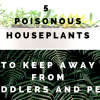 5 Poisonous Houseplants to Keep Away from Toddlers and Pets 715x513