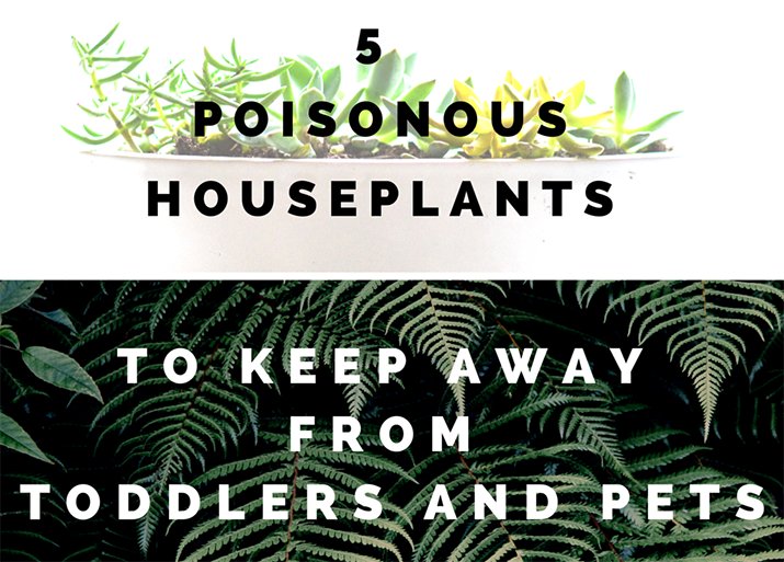 Which Houseplants Are Potentially Poisonous For Toddlers