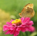 flowerandbutterfly How to Attract Butterflies into Your Garden